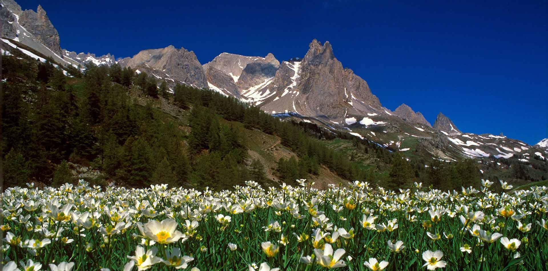 montagne-di-bardonecchia