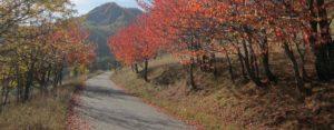 passeggiate in autunno a Bardonecchia