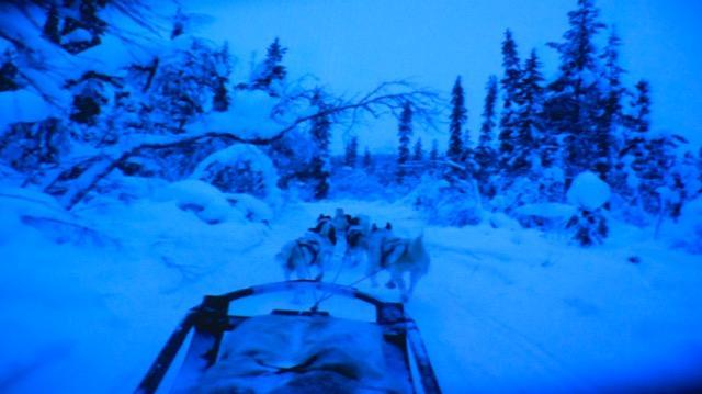 Cani da slitta Circolo Polare Artico
