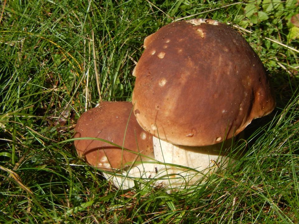 Mostra di funghi, bacche e frutti selvatici - Bardonecchia